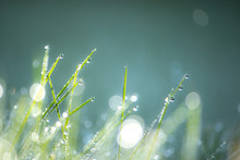 Green Grass With Dew Drops Macro Nature Background