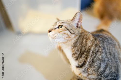 Fotografie, Obraz  cat