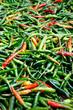 Leinwanddruck Bild Basket of dried chili pepper