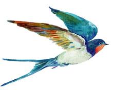 Bird Swallow,watercolor Illust...