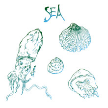 Hand Drawn Ink Pen Collection Of Sea Shells, Jellyfish, Sepia Octopus And Lettering. Vector Illustration For Cards And Travel Broshures