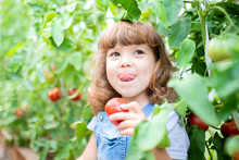 Little Girl In The Greenhouse With Tomato Plants