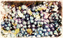 Detail Of Blueberry, Vaccinium...