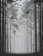 Alley Of Pine Forest With Flying Birds