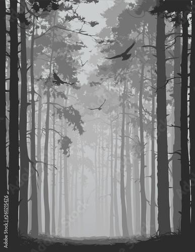 Okleiny na drzwi - Lasy - Drzewa  alley-of-pine-forest-with-flying-birds