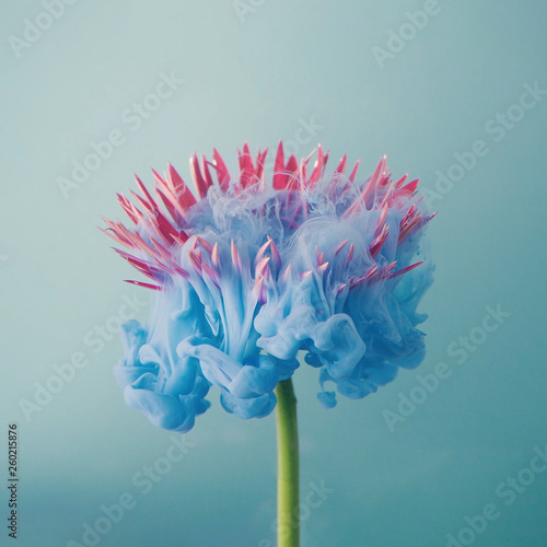 Poster Fleuriste Pink daisy flower with pastel blue ink. Creative abstract spring nature. Summer bloom concept.