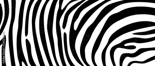 mata magnetyczna Zebra pattern texture repeating. Simple pattern, black line for textile design fabric. horizontal backdrop, black chaotic stripe isolated on white. hand drawn vector illustration.