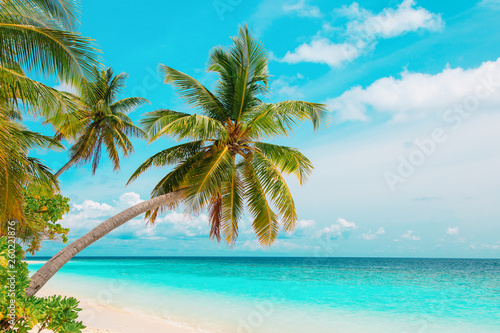 Fototapety, obrazy: tropical sand beach with palm trees, vacation at sea