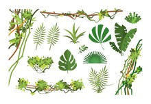 Jungle Vine. Cartoon Rainforest Leaves And Liana Overgrown Plants. Isolated Vector Set Of Exotic Jungle Plant, Palm Leaf And Green Branch Illustration