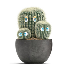 Cactus With Eyes In A Pot