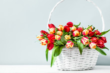 Basket With Flowers On Bright Background. Mother's Day Tulip Gift.