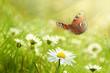 Leinwanddruck Bild Schmetterling 534