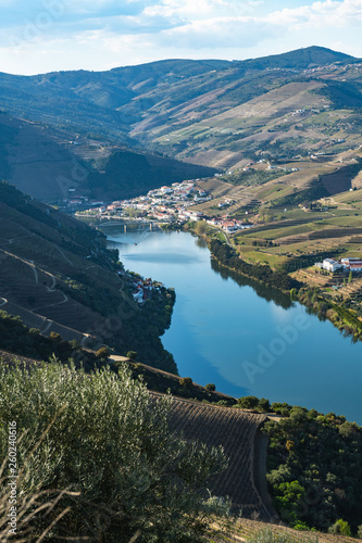 Poster Ligurie View of the terraced vineyards in the Douro Valley