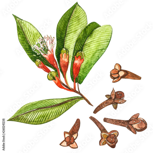 Dried Cloves botanical illustration of flowers and leaves Fototapete