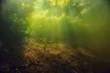 canvas print picture - underwater freshwater green landscape / underwater landscape of the lake ecosystem, algae, green water, fresh water