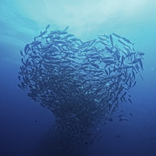 Flock Of Sea Fish In The Shape Of A Heart / Love Concept, Planet Ocean, Fish In The Sea