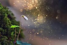 Waldklee Blüte In Mystischen ...