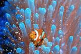 coral reef underwater / lagoon with corals, underwater landscape, snorkeling trip
