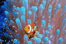 Coral Reef Underwater / Lagoon...