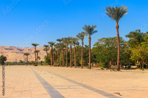 Cadres-photo bureau Palmier Palm trees on town square near Karnak temple complex in Luxor, Egypt