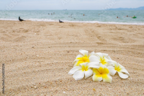 Wall Murals Plumeria A bunch of frangipani flowers on the sand beach with pigeons silhouette and blue sea on background