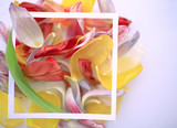 multicolored petals frame background / abstract spring background, flower field