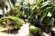 Weg zum Meer mit Palmen 2