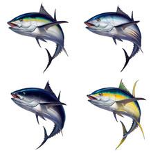 Big Set Of Tuna Fish Isolated Realistic Illustration. Black Fin Tuna. Yellow Tuna Atlantic Tuna Fish.