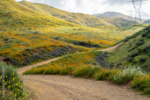 Fotografija  Dirt trail through Walker Canyon in Lake Elsinore during the poppy wildflower superbloom