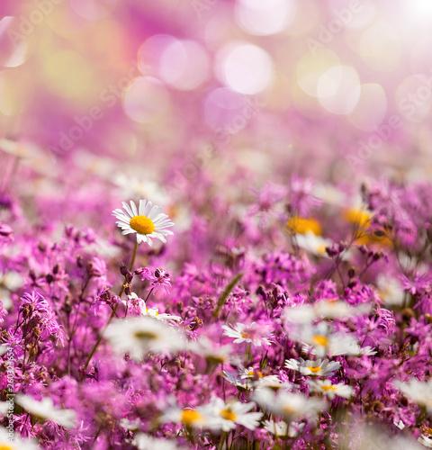 Cadres-photo bureau Fleuriste Fleurs de printemps, margueritte sur fond rose