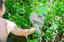 Children, Feeding Monkey On A ...