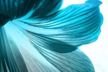 Flower Petals Close-up Background Texture In Blue Neon Light