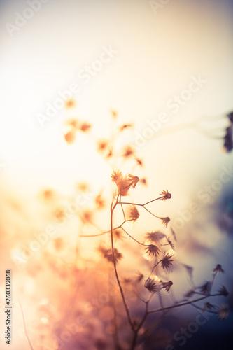 Fototapety, obrazy: Flowers soft light