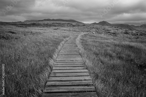 Fotografie, Obraz  Prairie Trail in Black and White