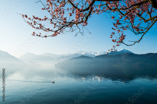 Türaufkleber Pool Lake of Lucerne. Weggis. Switzerland
