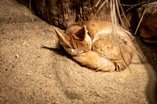 A Very Comfortable-looking Fox...