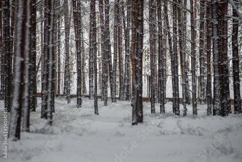 Tuinposter Berkbosje deep snow in forest in winter