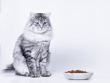 Beautiful Lovely Fluffy Cat Sitting Next To A Food Bowl And Licking Lips On Grey Background. Funny Large Longhair Gray Tabby Cute Kitten With Beautiful Yellow Eyes. Pets Care Concept.
