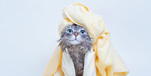 Funny Smiling Wet Gray Tabby Cute Kitten After Bath Wrapped In Yellow Towel With Blue Eyes. Pets And Lifestyle Concept. Just Washed Lovely Fluffy Cat With Towel Around His Head On Grey Background.