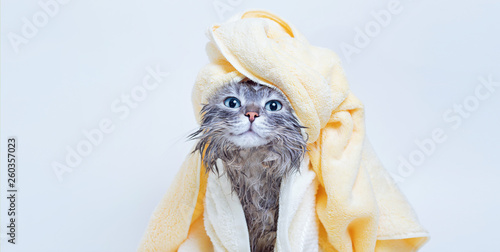 Foto op Plexiglas Kat Funny smiling wet gray tabby cute kitten after bath wrapped in yellow towel with blue eyes. Pets and lifestyle concept. Just washed lovely fluffy cat with towel around his head on grey background.