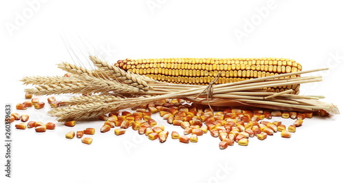 Fotografia  Dry ears of wheat and cob of corn with grain isolated on white background