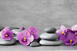 Fototapeta Kamienie - Blue flower and stone zen spa on grey background
