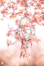 Traumfänger Im Kirschbaum Blüte