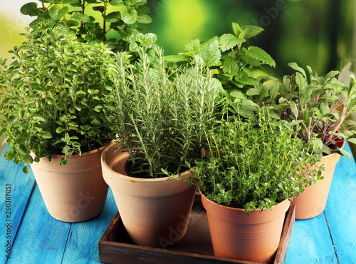 Fototapeta Homegrown and aromatic herbs in old clay pots on rustic background obraz