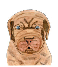 Dog French Mastiff Puppy Watercolor Painting