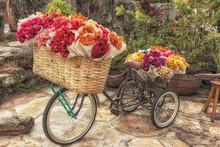 Bicicleta E Flores