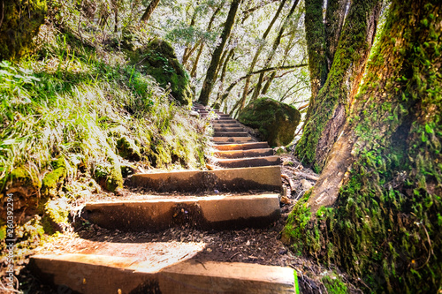 Poster Salmon Wooden steps going up through a green forest in Marin County, north San Francisco bay area, California
