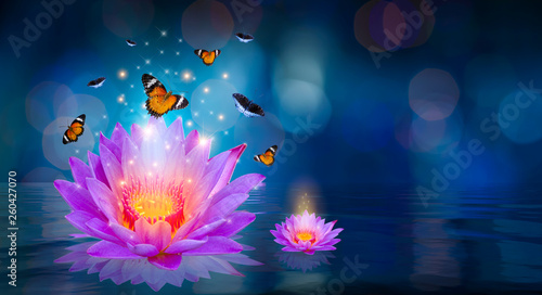 Montage in der Fensternische Lotosblume Butterflies are flying around the purple lotus floating on the water Bokeh