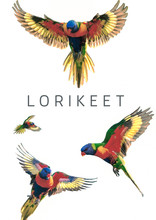 4 Rainbow Lorikeet Flying Parr...