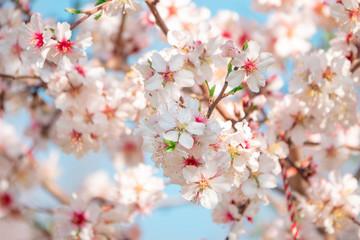 Naklejka Na szklane drzwi i okna Spring background. Beautiful blooming trees